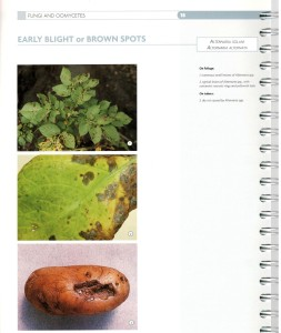 3.10.alternaria_early blight v. brown spots
