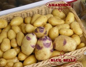 blu+amandine