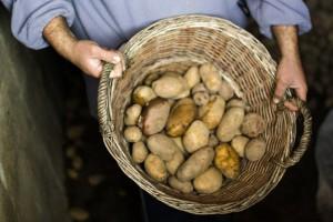 krumpli_szurke eger