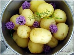 potatisx